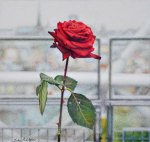 Le Georges Rose email size