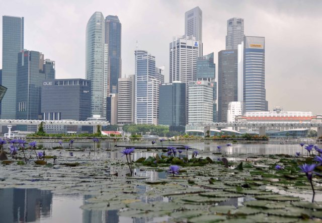 Singapore with water lilies.  16th April 2013.