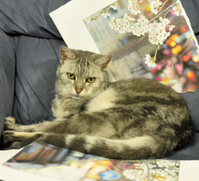 My cat, Saphie, surrounded by torn up drawing.