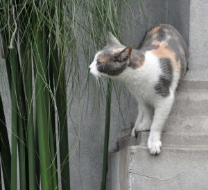 The climbing cat (from the last photo) has come back down again but still wants to explore.