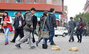People of Lima carefully walk around the resting cats.