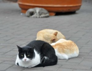 """""""I'm the cat on day-watch while my companions sleep."""""""