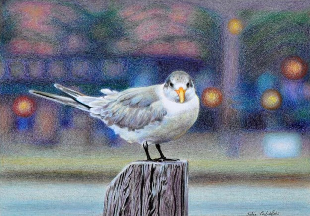 """""""Early Bird"""" 245 x 350 mm. Coloured pencils and oil pastels on pescia paper. A crested tern in front of The Left Bank Cafe Bar Restaurant at East Fremantle early in the morning."""