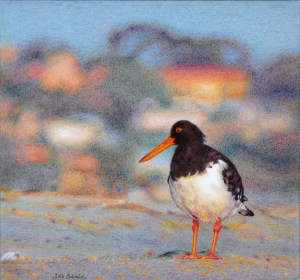 Eye Catcher Mixed media on pescia paper. 285 x 305 mm. November 2013. An oystercatcher on the sand at Point Walter, Western Australia.
