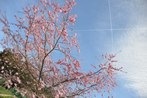 Vapour trails above Giverny in April.