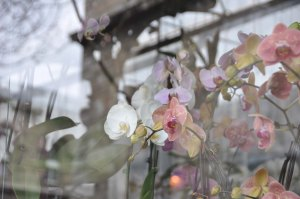 Orchid shop (with reflections) at Place Lépine.