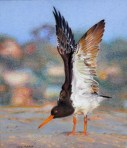Wingsblog
