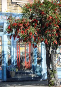Red flowers and red door