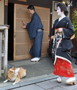 Canine observes human.