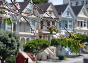 Painted Ladies with blossom 1.