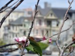 painted ladies with blossom
