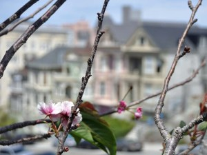 Painted Ladies with blossom 2.