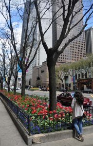 I will remember Chicago as a city of flowers. I have never seen such a wealth of beautiful flower beds on major city streets as I saw here in Chicago.
