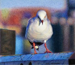 """The Humble Seagull"" Coloured pencils on Arches Aquarelle September 2016"