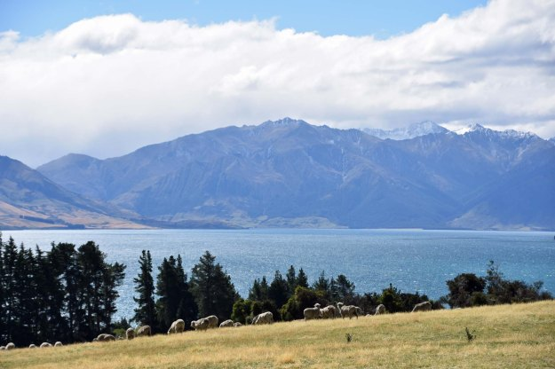 We stayed at Lake Hawea Station, a farm which has been in the same family since 1912.